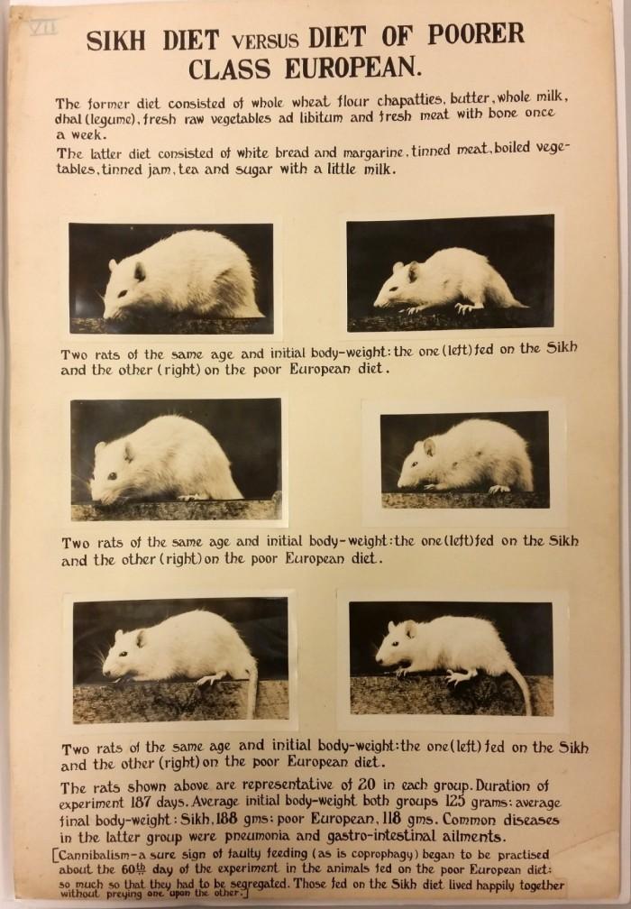 Mcs rats Sikh v English 1930s diet-3
